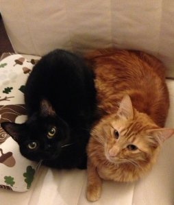 cats snuggling on chair