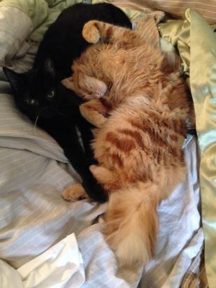 Nube and Ra cuddling